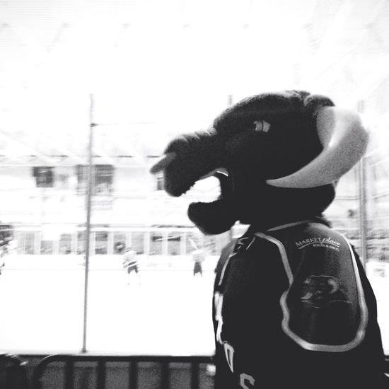 hats off to the bull Minot Minotauros Hockey