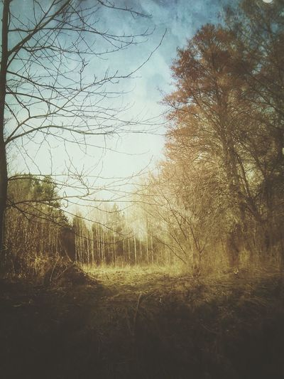 Nature Springtime Forest Strange Spring In The Forest Fores