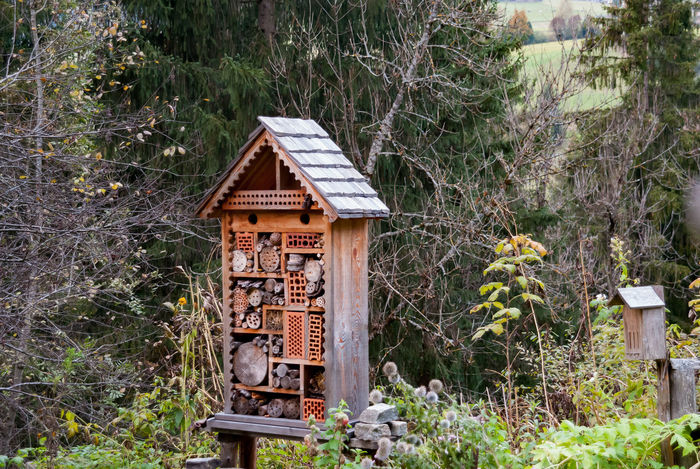 Bug Bugs Hotel Love Bugs Animal Themes Architecture Bugs And Man Bugs Life Building Exterior Growth Horticulture Impollinazione Nature Wild Hotel