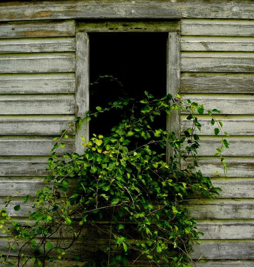 Nature Taking Over Architecture Building Exterior Built Structure Close-up Day Growth Nature No People Outdoors Plant Window Wood - Material