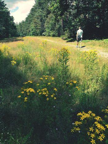 Foret Ballade En Forêt Ermenonville