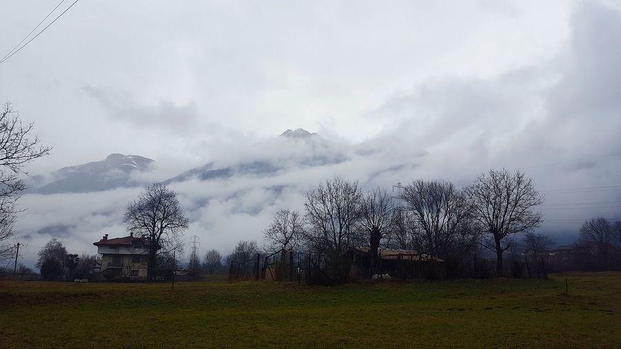 Mountain Clouds #cloudy #sky #foggy Tree Mountain Fog Sky Grass Cloud - Sky Farmland Farm Cultivated Land Snowcapped Mountain Snow Covered
