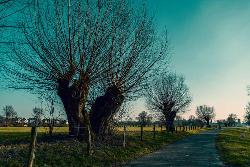#kaiserswerthmeadows08 Path Bare Tree Beauty In Nature Day Direction Environment Field Grass Land Landscape Nature No People Outdoors Plant Scenics - Nature Sky The Way Forward Tranquil Scene Tranquility Tree