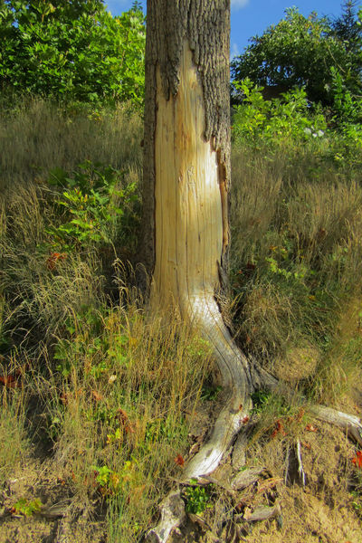 Tree Beauty In Nature Day Field Forest Grass Green Color Growth Land Landscape Nature No People Outdoors Plant Scenics - Nature Sunlight Swamp Tranquil Scene Tranquility Tree Tree Trunk Trunk