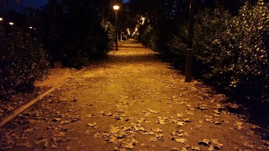 Night Taking