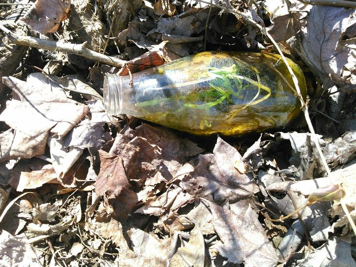 Bottle Terrarium Green Found Object Life Grass