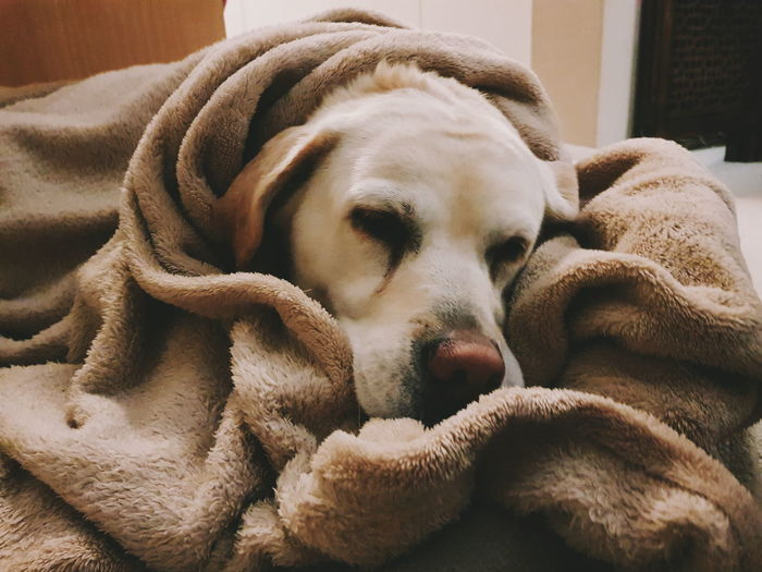 Beach Photography Labrador Nature Nature Photography Animal Themes Beach Cake Close-up Day Dog Domestic Animals Eyes Closed  Flower Flowers, Nature And Beauty Indoors  Lying Down Mammal Nature_collection No People One Animal Pets Relaxation Sea Sleeping