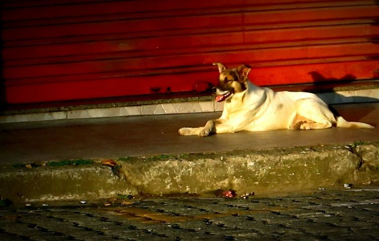 Relaxing Dog Barradopiraí Lazysunday EyeEm EyeEm Best Shots