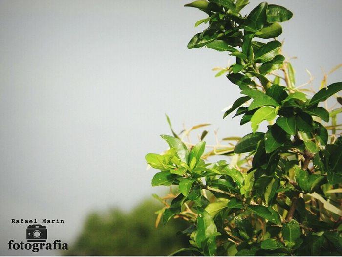 Hermosa naturaleza, arbol de semeruco Enjoying Life