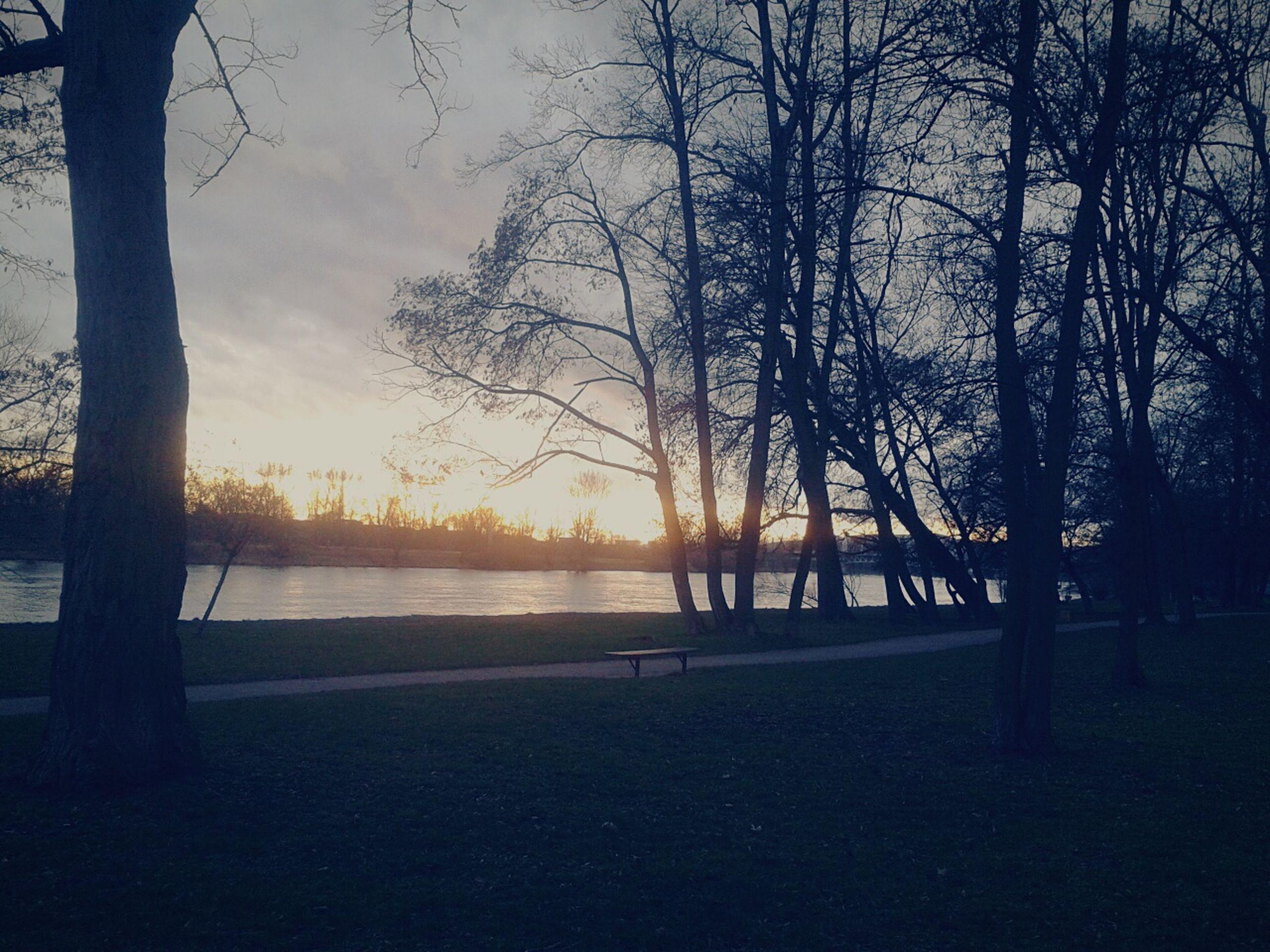 sunset, tree, silhouette, tranquility, tranquil scene, scenics, beauty in nature, water, sky, nature, tree trunk, bare tree, idyllic, branch, sun, sunlight, lake, orange color, outdoors, non-urban scene