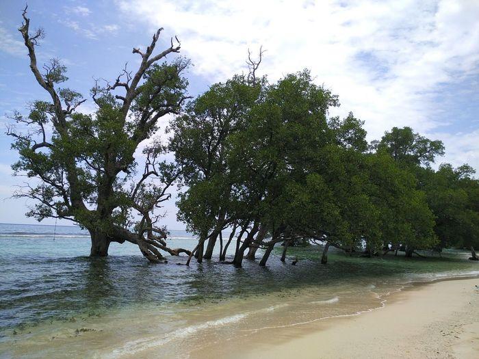 🌳 Aceh Tourism