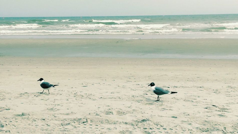 Birds at the seaside! Beach seasandsun beachlover Hanging Out Relaxing Taking Photos Enjoying Life Check This Out