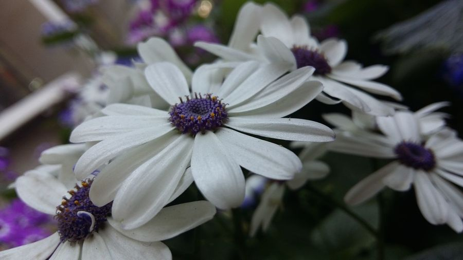 African Daisy Things I Like
