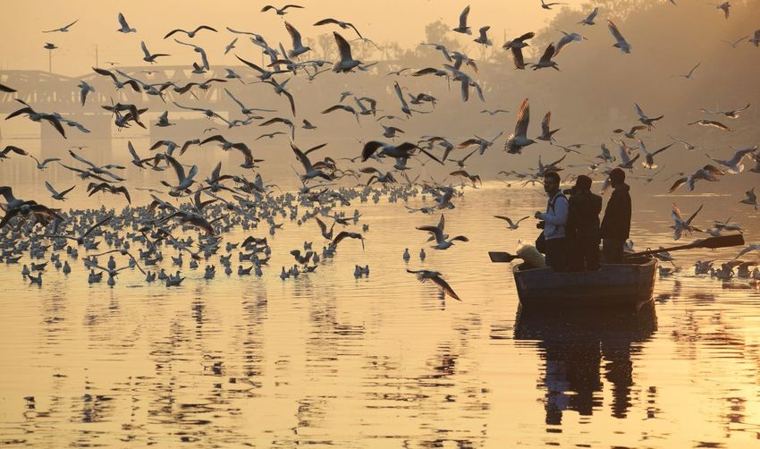 People In Boat With Birds Flying Over Lake Against Sky During Sunset