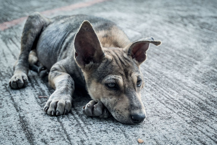 Stray dog relaxing on footpath