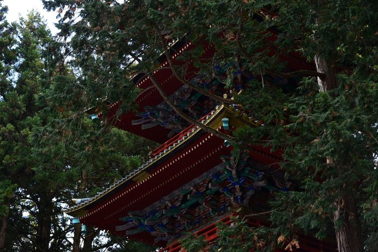 Tilt image of temple by trees in forest