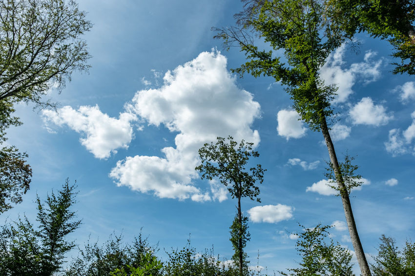 Tree Plant Sky Cloud - Sky Low Angle View Growth Beauty In Nature Day No People Nature Tranquility Green Color Tranquil Scene Branch Outdoors Blue Scenics - Nature Idyllic Non-urban Scene Sunlight Treetop