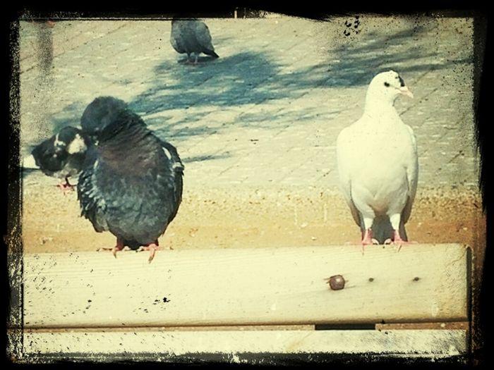 Birds Today Hot Look  Relaxing Deniz Feneri