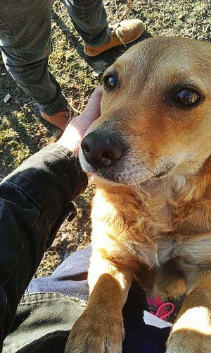 La hermosura que me encontré🐶💕 Pets Dog Refugio De Perros Callejeros Love Animals Upa EyeEm Animal Lover Eyeemphotography Iaia💕