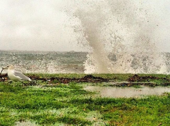 Waves crashing on the wall... Birds At Rhode Island Water_collection Eye4photography