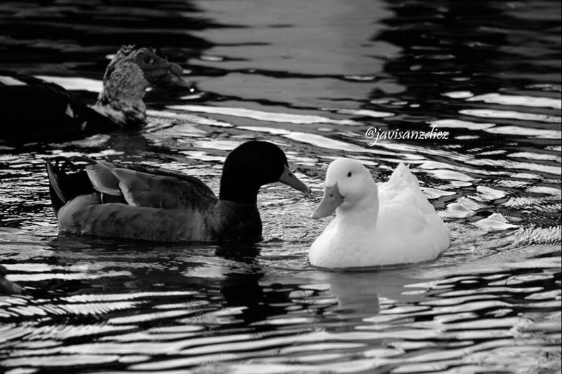 En blanco y negro Blackandwhite Animales Destinorural Aracena Movilgrafias Eye4black&white