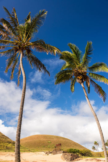 Low angle view of palm tree with sky in background