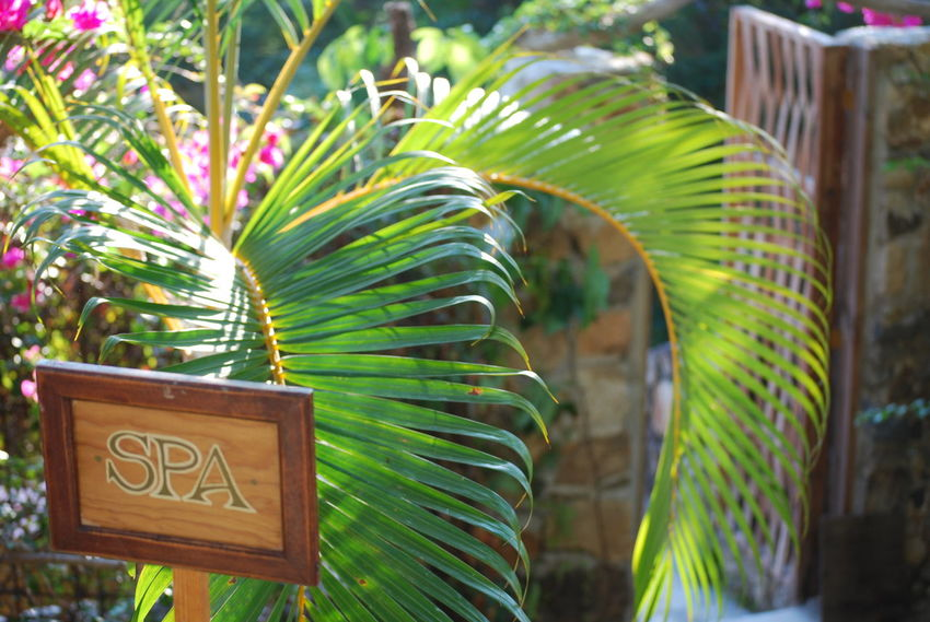 Entering the spa Beauty In Nature Day Green Color Mexico Nature No People Outdoors Palm Leaf Palm Tree Palms Pamper Pampering Plant Sign Spa Travel Yelapa
