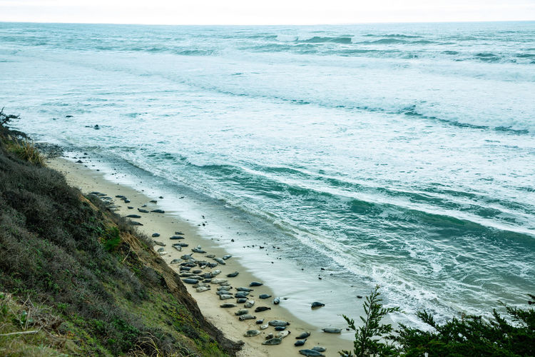 Water Sea Land Beach Beauty In Nature Wave Sand Scenics - Nature Nature Horizon Horizon Over Water Motion Aquatic Sport Surfing High Angle View Day Sky Outdoors Sea Lion