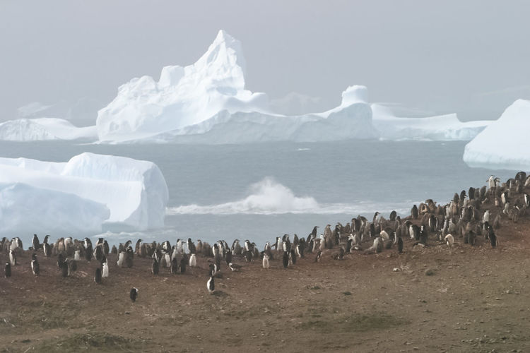 Group of penguins on at beach