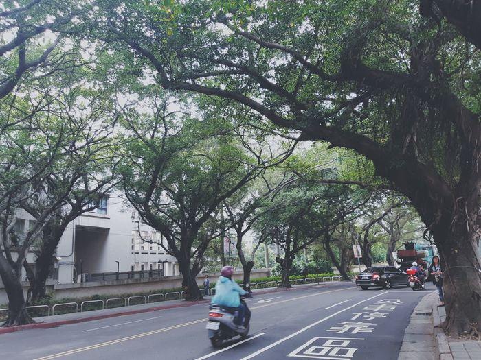 💚 Street Photo Hugging Trees Taipei Taiwan Tree City Full Length Road Women Branch Sky Motor Scooter Motorcycle Moving Treelined