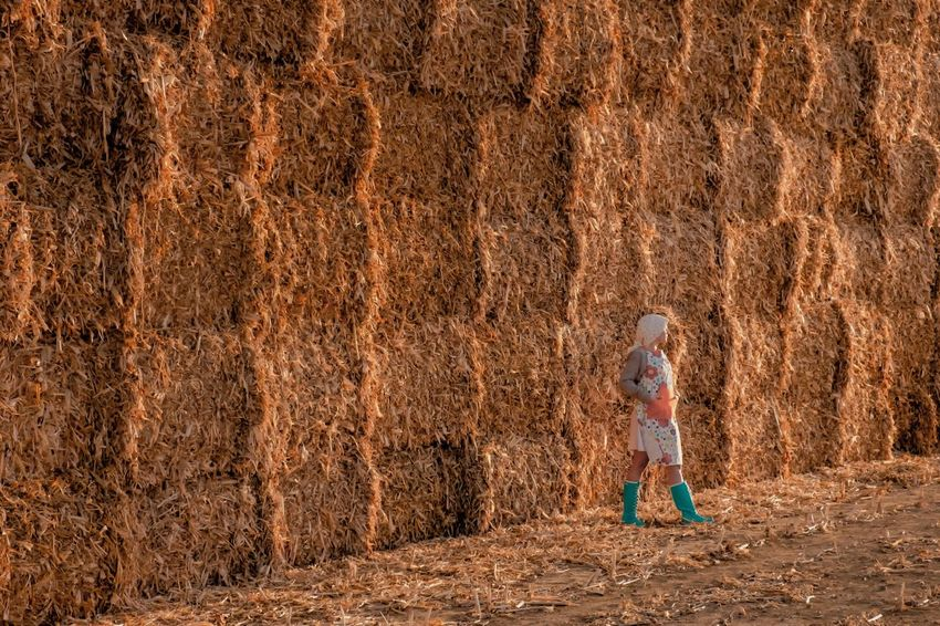 - MAKE HAY WHILE THE SUN SHINES - Agriculture Hay Check This Out Erntedank, Thanksgiving ThatsMe Brown Casual Clothing Child Childhood Day Females Forest Full Length Innocence Land Nature Offspring One Person Outdoors Plant Rear View Standing Tree