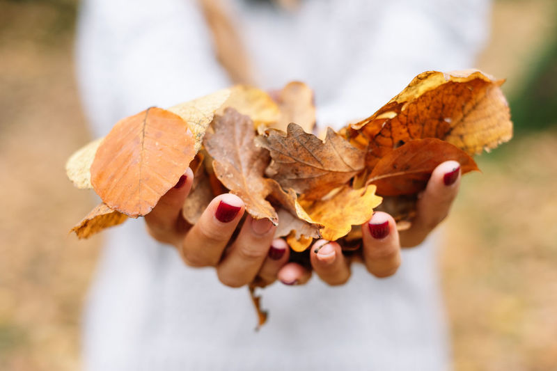 Midsection of woman holding autumn leaves outdoors
