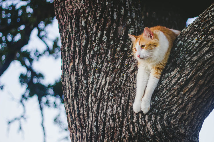 Cat in Tree Animal Animal Themes Bark Cat Cat In Tree Day Domestic Domestic Animals Domestic Cat Feline Focus On Foreground Mammal Nature No People One Animal Outdoors Pets Plant Plant Bark Tree Tree Trunk Trunk Vertebrate Whisker