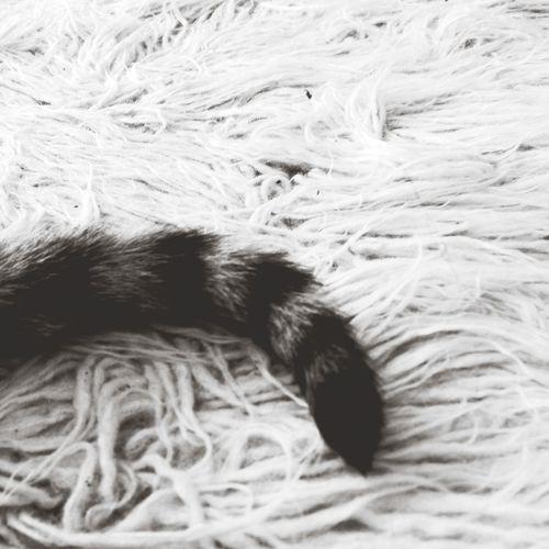 Livingroom Capa Filter My Cat Flokati Rug