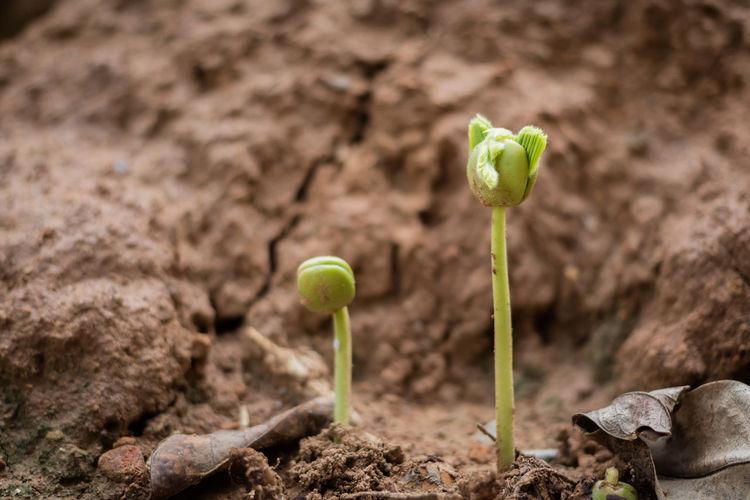 Close-Up Of Saplings Growing On Field