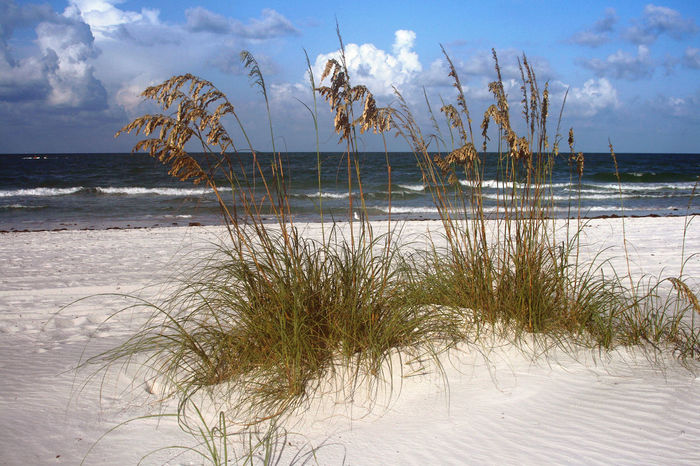 Beach Beauty In Nature Coastline Gulf Of Mexico Horizon Over Water Madeira Beach Florida Outdoors Saint Petersburg Florida Scenics Sea Seaoats Shore Sky Tampa Bay Water