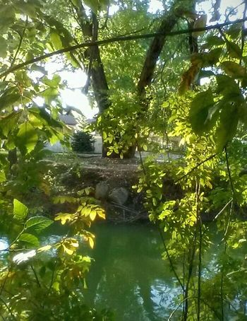 Art Is Everywhere Nature_collection Beside The Road Overlooked Beauty Serenity In The City Riverside Photography Trees And Water Tree Art No People Outdoors