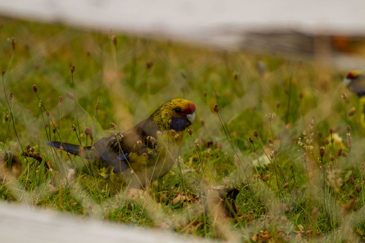 High angle view of bird perching on grassy land