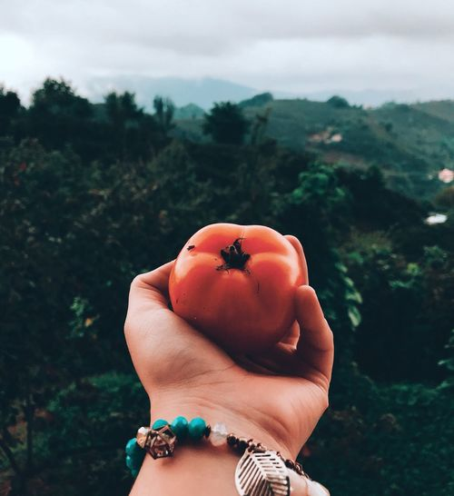 Cropped hand holding tomato against landscape
