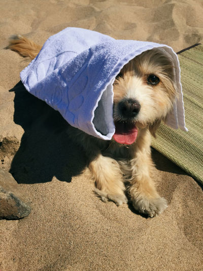 Cute dog hiding from the sun on a hot day at the beach Cute Beach Hot Day Dogs Dog The Essence Of Summer