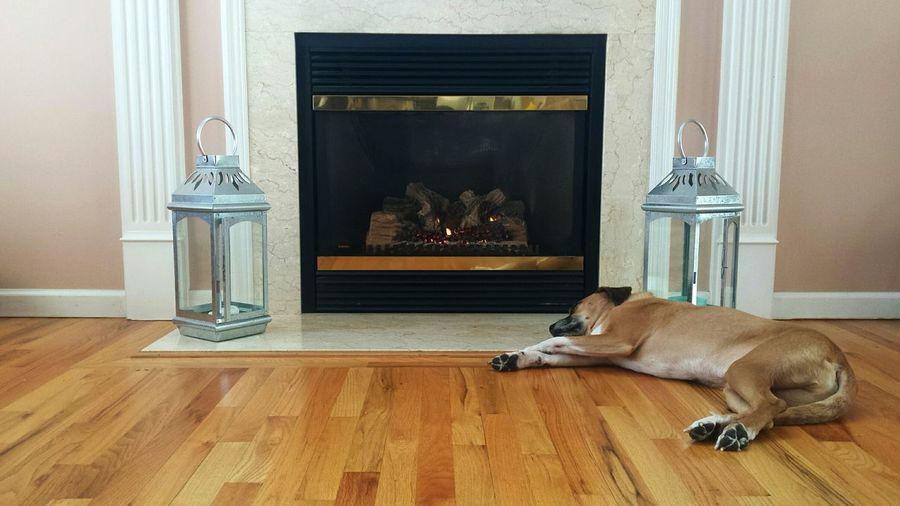 Dog standing on hardwood floor