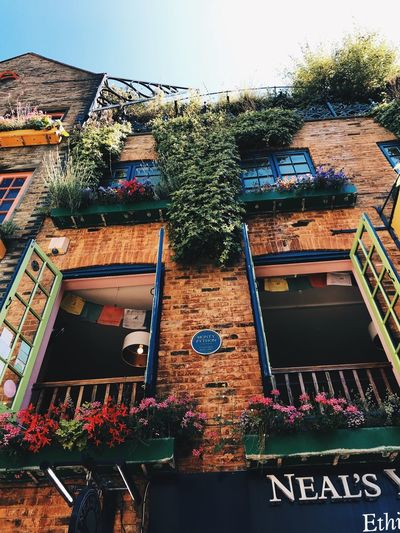 Flower EyeEm Selects EyeEmBestPics EyeEm Gallery EyeEm Best Shots London House Beautiful Plaza Neal's Yard Summer Architecture Building Exterior Built Structure Building No People Low Angle View Day Nature Sky Plant Window