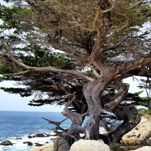 Low angle view of driftwood on tree by sea