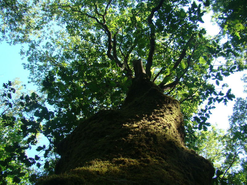 Leafage Trees