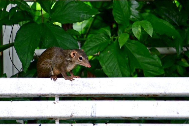 Rat Animal Animal Wildlife Mammal Leaf Red Child Cute Nature Forest Outdoors Tree Day Close-up People