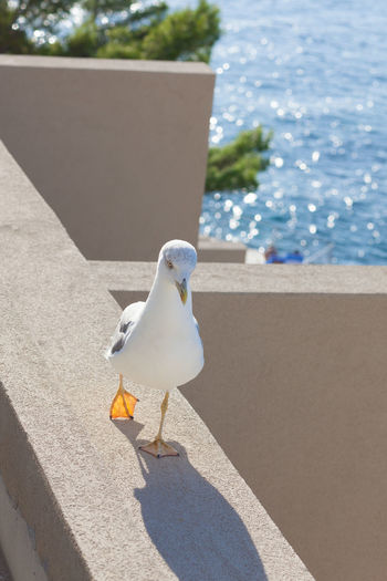 High angle view of seagull perching on retaining wall