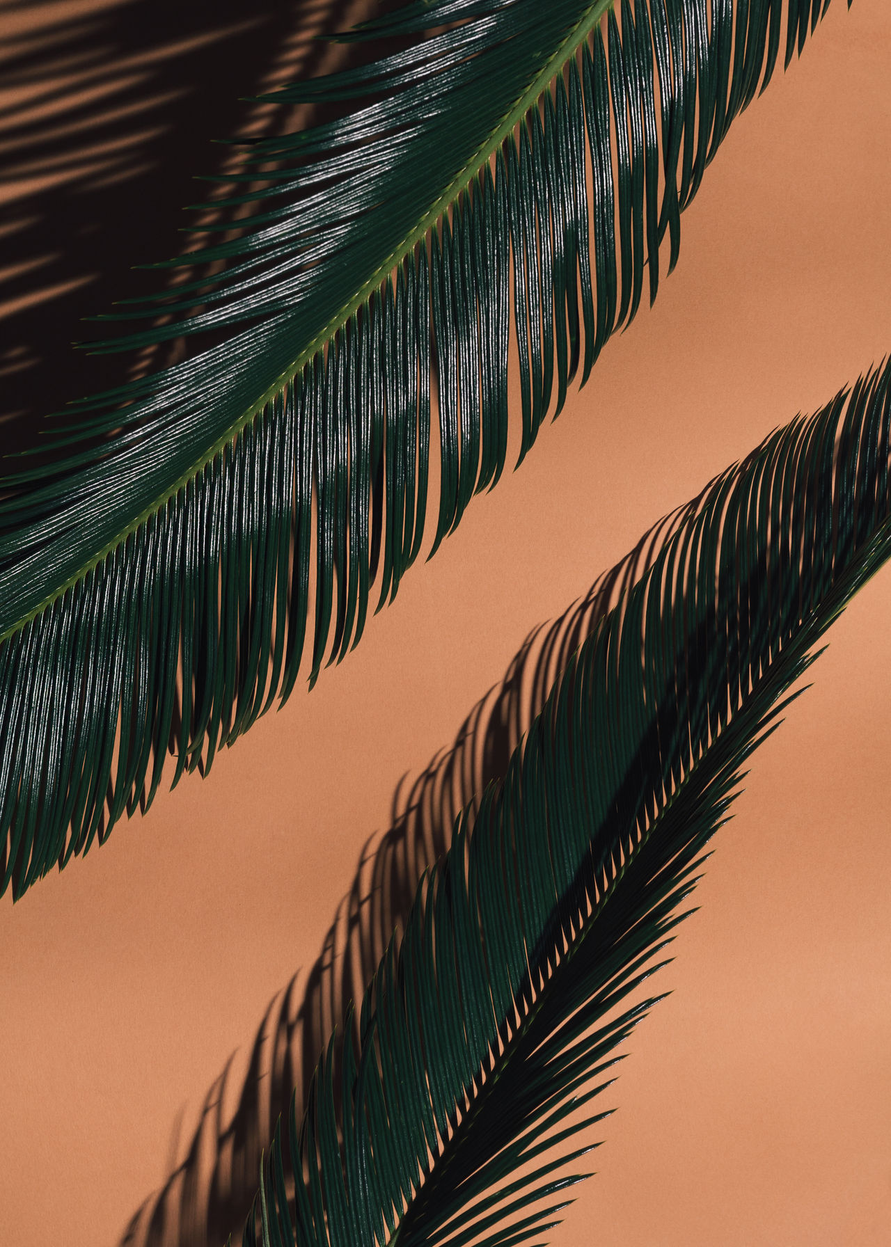 Close-up of leaves against sky during sunset