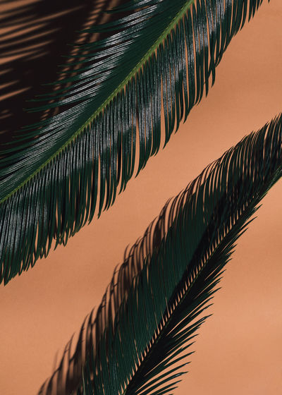 Background Backgrounds Beauty In Nature Close-up Coloful EyeEm Nature Lover Green Color Growth Nature Orange Orange Color Palm Tree Pattern Spring Summer Tree The Week On EyeEm Editor's Picks