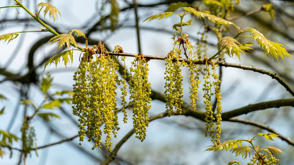 Growth Nature Plant Plant Part Tranquility Tree Day No People Outdoors Scenics - Nature Springtime Yellow