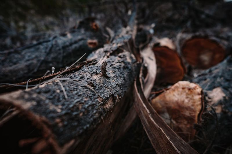 Nature Close-up Selective Focus No People Log Outdoors Day Wood Wood - Material Tree Trunk Trees Nature Nature Photography Nature_collection Autumn Naturelovers Earth Landscape EyeEmNewHere
